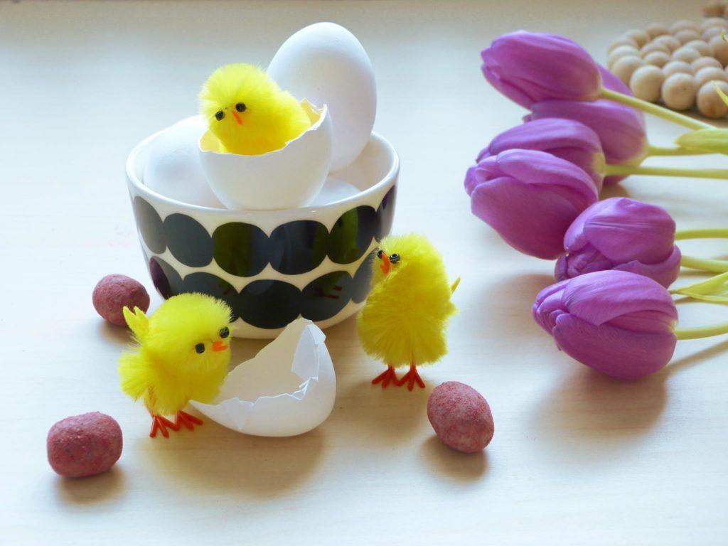Kolme keltaista pääsiäistipukoristetta kuoriutumassa munasta, jonka vierellä myös violetteja tulppaaneja.